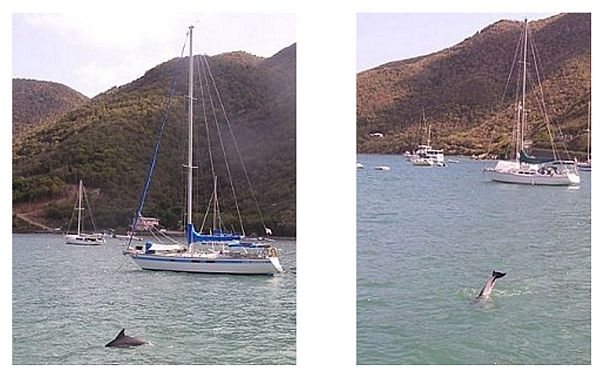Dolphins in Coral Bay