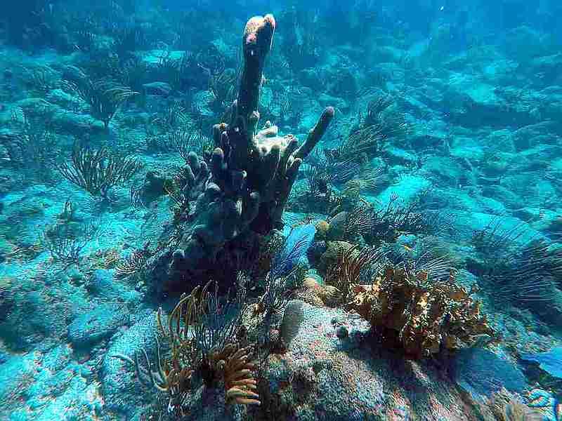 Snorkel with Deedra